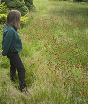 Nina Eckburg, Kootenai County Weed Superintendent views a yard of Orange Hawkweed.